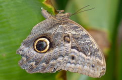 Exotic butterfly in natural habitat Royalty Free Stock Photography