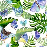 Exotic butterfly wild insect and tropical leaf pattern in a watercolor style. Full name of the insect: blue butterfly. Aquarelle wild insect for background Royalty Free Stock Images