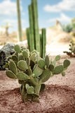Exotic cactus in desert Royalty Free Stock Images