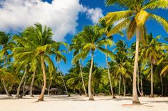Exotic Caribbean beach full of beautiful palm trees, Dominican Republic Stock Photo