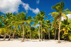 Exotic Caribbean beach full of beautiful palm trees, Dominican Republic Stock Image