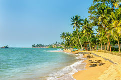 Exotic Caribbean beach full of palm trees Royalty Free Stock Photos