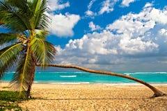 Exotic Caribbean Palm Tree Royalty Free Stock Photos