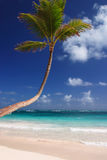 Exotic Carribean beach with palm tree Stock Photo