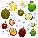 Exotic cartoon feijoa, durian and maracuya fruits Stock Photo