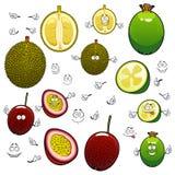 Exotic cartoon feijoa, durian and maracuya fruits Stock Photo