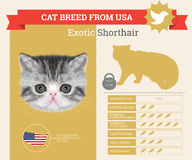 Exotic Cat breed  infographics Stock Photo