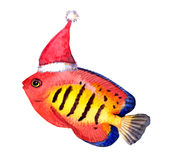 Exotic christmas fish in red santa's hat. Watercolor. Exotic character christmas fish in red santa's hat. Watercolor new year tropical fish Royalty Free Stock Photos