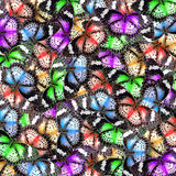 Exotic color butterfly Royalty Free Stock Image