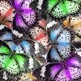 Exotic color butterfly Stock Photography