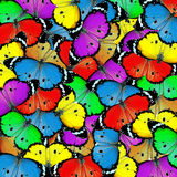 Exotic color butterfly Royalty Free Stock Photos