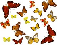 Exotic colored butterfiles background Stock Photo