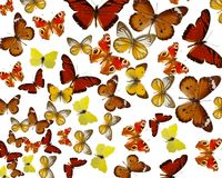 Exotic colored butterfiles background Stock Photos