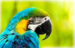 Exotic colorful African macaw parrot Stock Photos