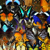 Exotic colorful background texture made of compilation butterfli Royalty Free Stock Images