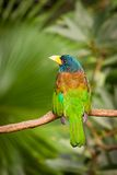Exotic colorful bird sitting on a branch Royalty Free Stock Images