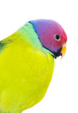 The exotic colorful birds Royalty Free Stock Image