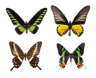 Exotic colorful butterflies Royalty Free Stock Photos