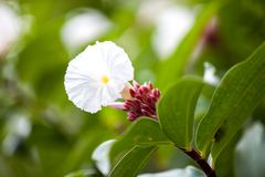 Exotic colorful flowers on the bush with a lot of green leaves Stock Image