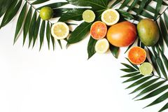 Exotic composition of fresh mango, lemons, oranges, lime fruit and lush green palm and aralia leaves isolated on white. Table background. Tropical summer stock photo