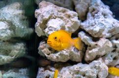 Exotic coral fish in aquarium Stock Photos
