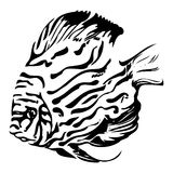 Exotic coral fish black and white vector illustrat Stock Image