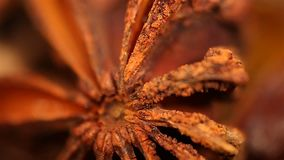 Exotic dried anise spice rotating on plate, extreme close-up. Culinary art. Stock footage stock video footage
