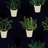 Exotic fern in flowerpots. Background Royalty Free Stock Image