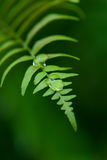 Exotic ferns Royalty Free Stock Photos
