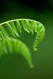 Exotic ferns Stock Photography