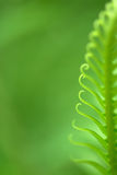 Exotic ferns Stock Photos