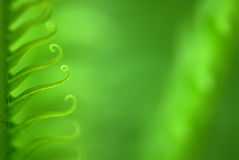 Exotic ferns Royalty Free Stock Photography