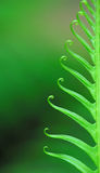 Exotic ferns Royalty Free Stock Images