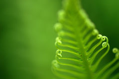 Exotic ferns Royalty Free Stock Image