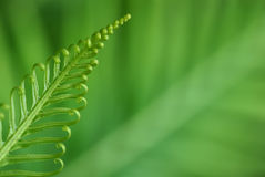 Exotic ferns Stock Image