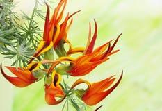 Exotic fiery orange flower. On a branch