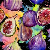 Exotic figs wild fruit in a watercolor style pattern. Exotic figs healthy food in a watercolor style pattern. Full name of the fruit: figs. Aquarelle wild fruit Stock Photography