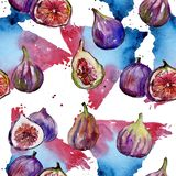 Exotic figs wild fruit in a watercolor style pattern. Exotic figs healthy food in a watercolor style pattern. Full name of the fruit: figs. Aquarelle wild fruit Royalty Free Stock Image