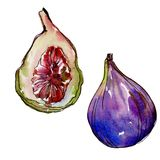 Exotic figs wild fruit in a watercolor style isolated. Exotic figs healthy food in a watercolor style isolated. Full name of the fruit: figs. Aquarelle wild Stock Image
