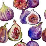 Exotic figs wild fruit in a watercolor style pattern. Exotic figs healthy food in a watercolor style pattern. Full name of the fruit: figs. Aquarelle wild fruit Stock Images