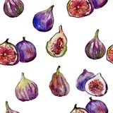 Exotic figs wild fruit in a watercolor style pattern. Exotic figs healthy food in a watercolor style pattern. Full name of the fruit: figs. Aquarelle wild fruit Stock Photos