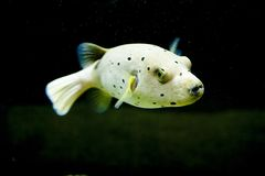 Exotic fish Royalty Free Stock Photo