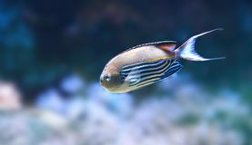 Exotic fish Stock Photos