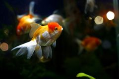 Exotic fish. Sea world, vibrant colors Royalty Free Stock Photos