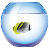 Exotic fish. In the tank round. Vector illustration Stock Photos
