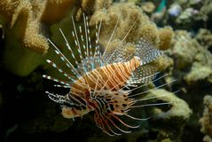 Exotic fish. In a habitat of dwelling royalty free stock image