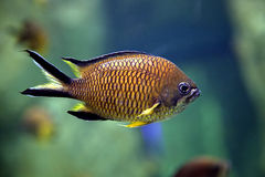 Exotic fish Stock Photography