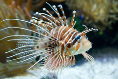Exotic fish. A view of an exotic fish in an oceanographic museum aquarium stock photos
