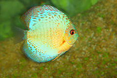 Exotic fish. Beauty of marine life stock images