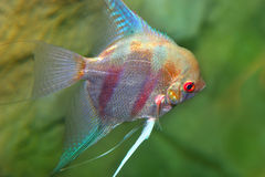 Exotic fish. Beauty of marine life royalty free stock photo